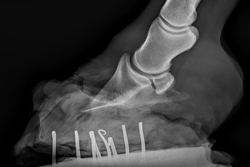 right front foot april 14 2016