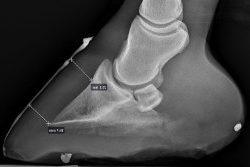 front right foot january 20 2017